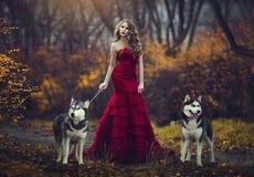 Una bella ragazza bionda in un vestito rosso elegante, camminante con due cani del husky in una foresta di autunno Immagini Stock Libere da Diritti