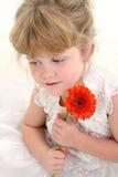 Una bella ragazza di quattro anni che tiene margherita arancione Fotografia Stock