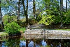 Una bella scena dello stagno con gli arbusti, gli alberi, le foglie e l'erba circondanti lo stagno con un cielo blu e le nuvole n immagine stock libera da diritti