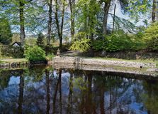 Una bella scena dello stagno con gli arbusti, gli alberi, le foglie e l'erba circondanti lo stagno con un cielo blu e le nuvole n fotografia stock