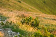 Una bella traccia di escursione nelle montagne Paesaggio della montagna in Tatry, Slovacchia fotografie stock libere da diritti