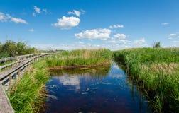 Una bella vista della natura selvaggia Fotografie Stock