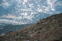 Una bella vista delle montagne innevate dei Carpathians dalla cima di Goverly in primavera in un bello soleggiato Fotografia Stock