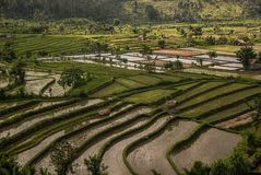 Una bella vista delle risaie a terrazze di stordimento con le colline gradisce le scale, Bali Immagini Stock