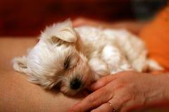 Una belleza durmiente Foto de archivo libre de regalías