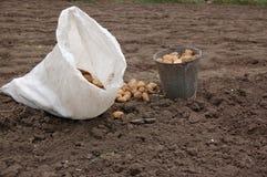 Una benna con una patata fotografia stock
