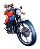Una bici di guida del bulldog Fotografie Stock