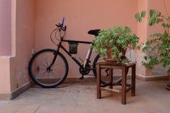 Una bici e una pianta Fotografia Stock Libera da Diritti