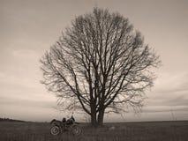 Una bici y un árbol Imagenes de archivo