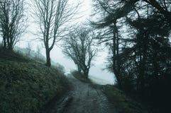 Una bifurcación en una trayectoria fantasmagórica del arbolado en un día de inviernos de niebla con un frío, mudo corrija fotos de archivo libres de regalías