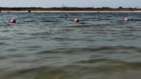 Una boa che galleggia sull'oceano archivi video