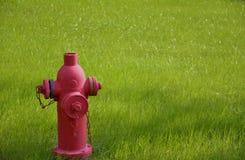 Una boca de incendios roja y una hierba verde Imagenes de archivo