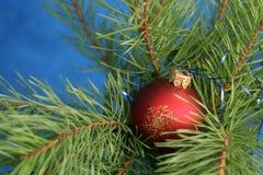 Una bola roja en un árbol de navidad Fotos de archivo
