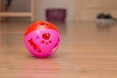 Una bola rosada para jugar del animal doméstico Imagen de archivo libre de regalías