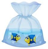 Una bolsa de plástico con dos pescados Imagen de archivo libre de regalías