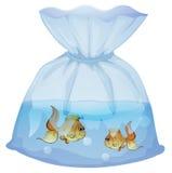Una bolsa plástica con dos pescados Fotografía de archivo libre de regalías