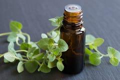 Una botella de aceite esencial del orégano con orégano fresco se va Foto de archivo libre de regalías