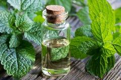 Una botella de aceite esencial del toronjil con las ramitas frescas del toronjil Imagen de archivo libre de regalías