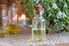 Una botella de aceite esencial sabroso de la montaña con el Satureja fresco MES imagenes de archivo