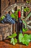 Una botella de vino en el fondo de la vid foto de archivo libre de regalías