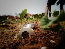 Una botella sirangy agradable en fango con lleno de pequeñas plantas imágenes de archivo libres de regalías