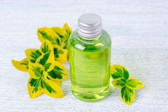Una bottiglia del gel naturale della doccia con le piante Fotografie Stock Libere da Diritti