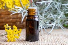 Una bottiglia dell'olio essenziale del helichrysum con helich di fioritura fresco immagini stock