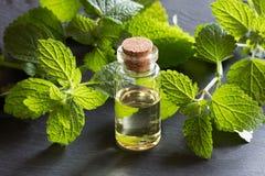 Una bottiglia dell'olio essenziale della melissa su fondo scuro immagini stock