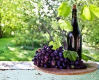 Una bottiglia di vino, della vite e del mazzo di uva su un fondo di Th Immagine Stock