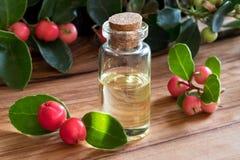 Una bottiglia di wintergreen l'olio essenziale su una tavola di legno fotografia stock libera da diritti
