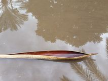 Una buccia torta del ramo che assomiglia ad una canoa in una pozza un giorno piovoso, con una riflessione delle palme e del cielo fotografia stock libera da diritti