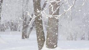 Una bufera di neve nella foresta di inverno stock footage