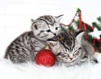 Una bugia di due gattini sotto l'albero di Natale Fotografia Stock