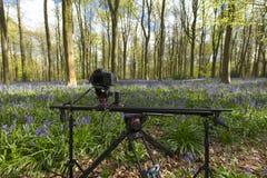 Una cámara del timelapse puso entre las campanillas y los árboles en Wes imagenes de archivo