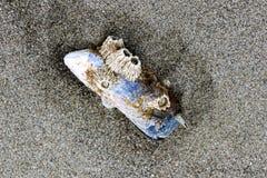Una cáscara del olmo cubierta con las cáscaras miente en la arena después de una marea baja imagen de archivo libre de regalías