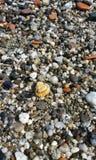 Una cáscara en la playa Foto de archivo
