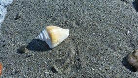 Una cáscara en la playa de la línea de la playa Foto de archivo