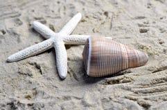 Una cáscara y una estrella de mar del mar Fotografía de archivo