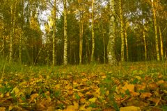 Una caída de hojas en un parque del otoño de la ciudad Fotos de archivo libres de regalías