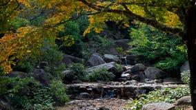 Una caída del agua fluye sobre rocas en un bosque japonés del otoño verde enorme fotos de archivo libres de regalías
