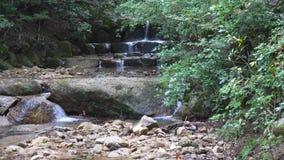 Una caída del agua fluye sobre rocas en un bosque japonés del otoño verde enorme metrajes