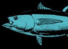 Una cabeza de los pescados de atún de Bluefin Fotos de archivo
