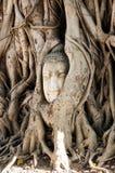 Una cabeza de piedra de Buda en Wat Prha Mahathat Temple Imagen de archivo