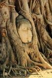 Una cabeza de piedra de Buda en Wat Prha Mahathat Temple Imagenes de archivo