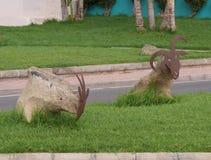Una cabra en las calles de Fuerteventura Imagen de archivo libre de regalías