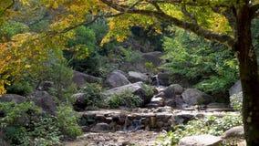 Una caduta dell'acqua entra sopra le rocce in una foresta giapponese di autunno verde fertile video d archivio