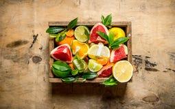 Una caja de agrios - pomelo, naranja, mandarina, limón, cal y hojas Fotos de archivo libres de regalías