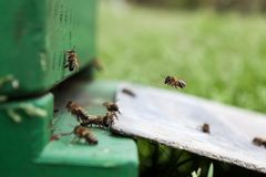 Una caja de la abeja Foto de archivo libre de regalías
