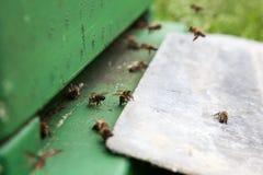 Una caja de la abeja Imágenes de archivo libres de regalías