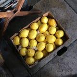 Una caja de limón fresco Imagen de archivo